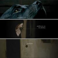 Webová prezentace filmu T.M.A. 1